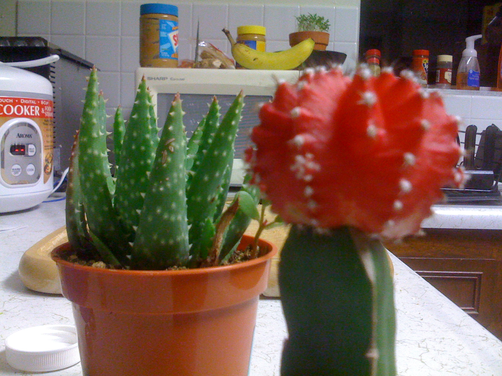 New IPhone Focused On Red Cactus